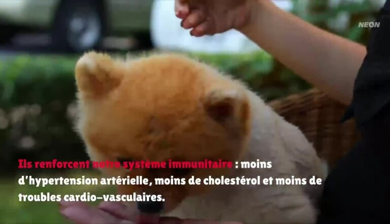 Reportage dans l'hôpital de la Faune sauvage, où l'on soigne les animaux malades des hommes