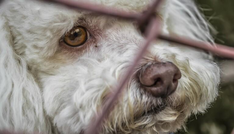 240 parlementaires français s'engagent contre l'abandon des animaux