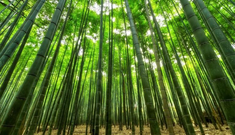 Non, le bambou n'est pas un matériau si écolo que ça (il peut même être très polluant)