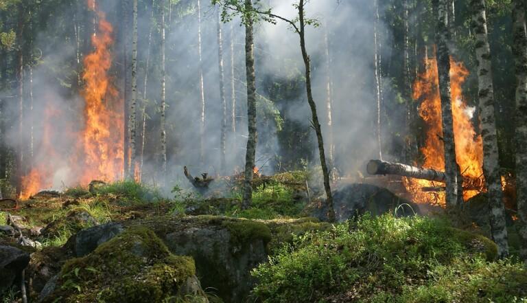 Amazonie : 5 façons d'aider à préserver le poumon vert de la planète