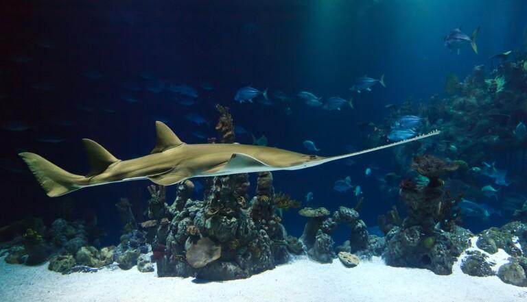 Espèces menacées : 9 raisons de sauver les requins