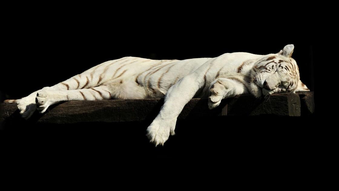 Comment bien dormir : le guide pour la team insomniaques