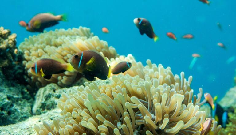Réchauffement climatique : les océans commencent à manquer d'oxygène