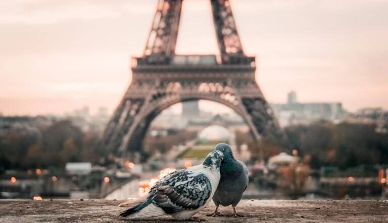 Les Français et l'amour en 15 chiffres