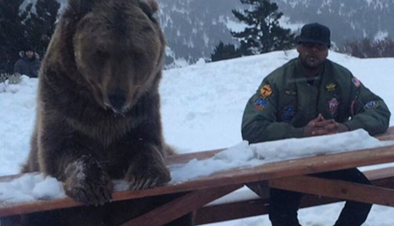 Sur Internet, Leonardo Dicaprio et Booba remettent l'ours au goût du jour
