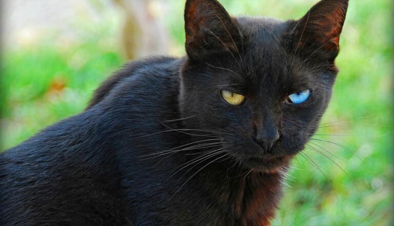 Les chats savent quand vous êtes tristes (mais ils restent de gros égoïstes quand même)