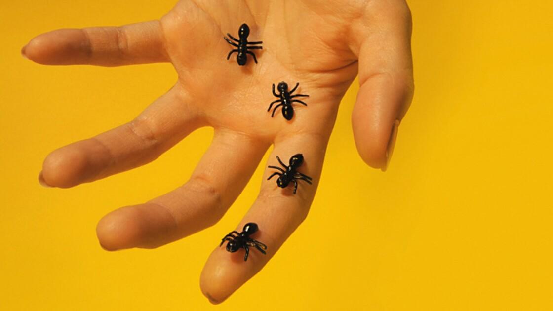 Pourquoi est-ce qu'on a des fourmis ?