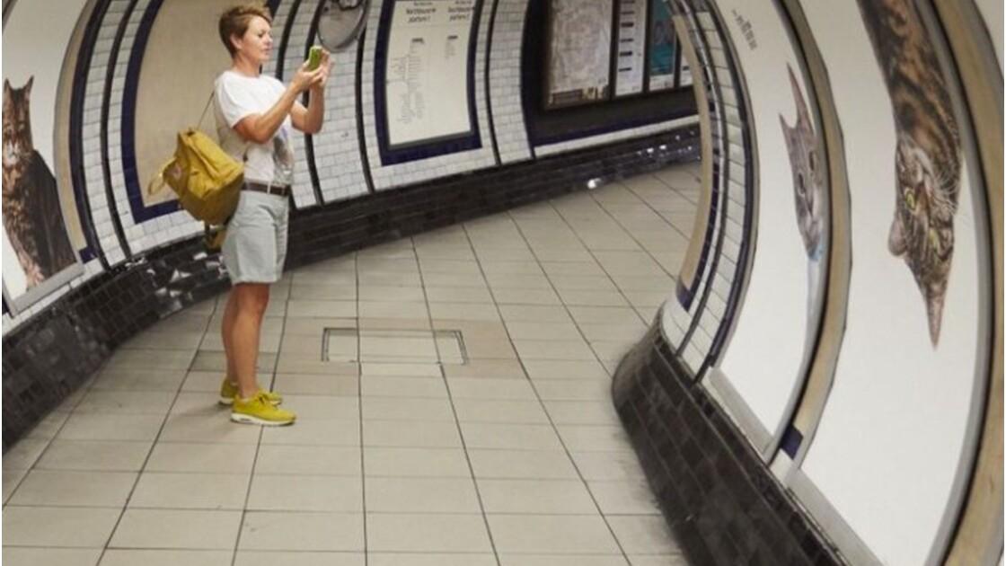Dans cette station de métro, les chats ont remplacé la publicité