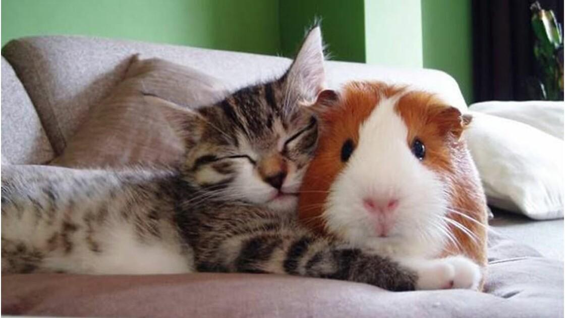 Selon une étude, la moitié de vos amitiés ne sont pas réciproques