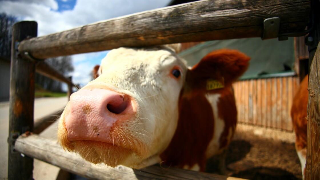 Es-tu au Salon de l'agriculture ?