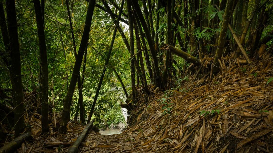 Aux Philippines, chaque élève devra planter 10 arbres pour obtenir son diplôme
