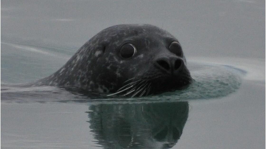 Vaut-il mieux boire la tasse à la mer ou dans une piscine ?