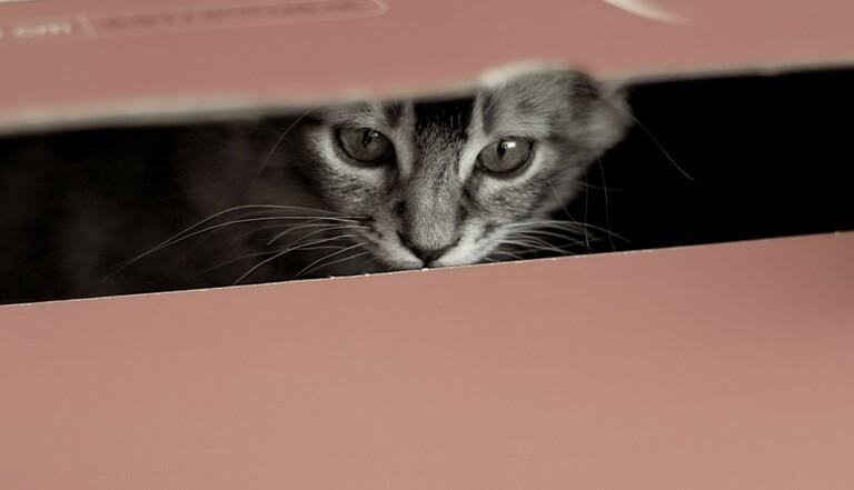 Pourquoi les chats aiment rentrer dans des boîtes ?