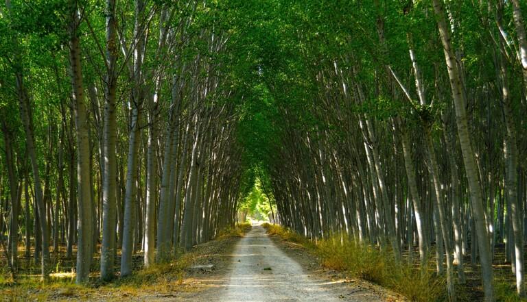 Des chercheurs ont génétiquement modifié des arbres pour qu'ils cessent de dégager un gaz dangereux pour le climat