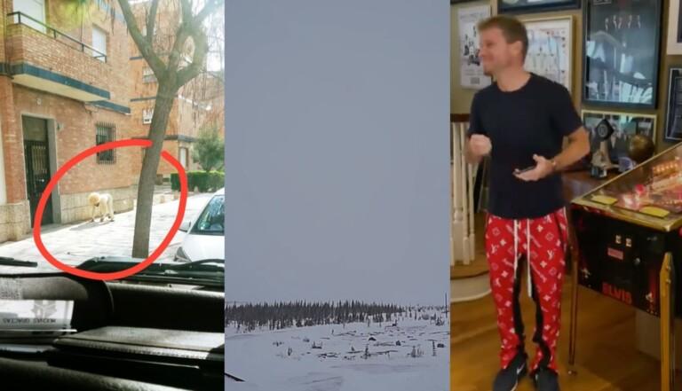 LA RÉCRÉ - 5 news qui font du bien avec les Backstreet Boys en pyjama et des aurores boréales en direct
