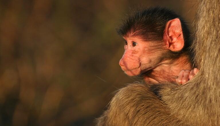 Avec le confinement, un baby boom dans les zoos partout dans le monde ?