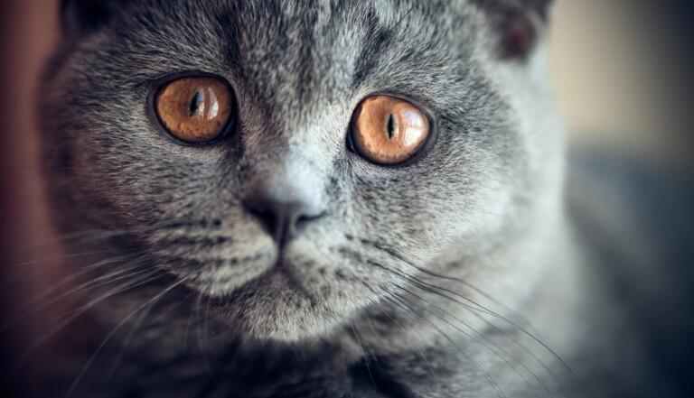 L'attachement à son chat est lié à l'anxiété, selon une étude