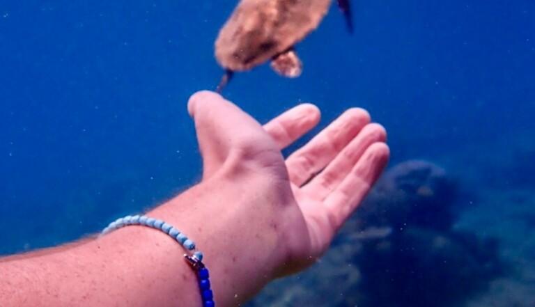 Un bracelet en acier, argent et déchets plastiques recyclés pour sauver les récifs coralliens