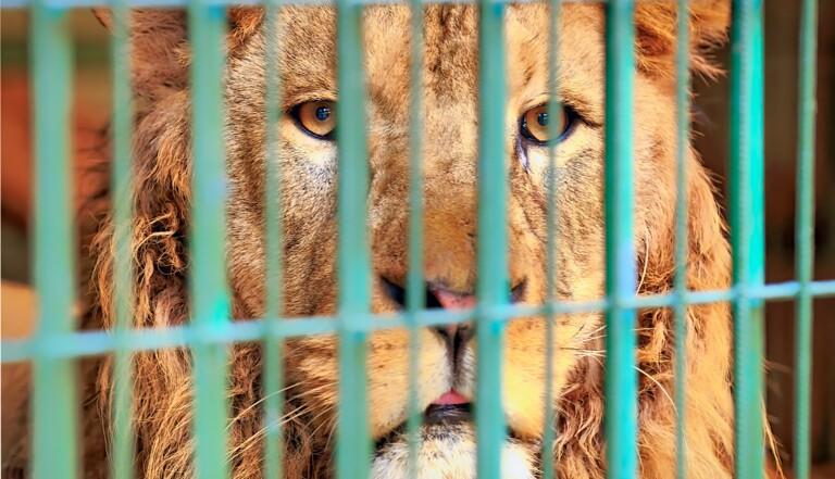 La ville de Marseille compte interdire les cirques avec des animaux