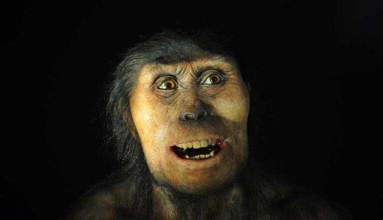 Covid-19 : les porteurs d'un gène de Néandertal plus susceptibles de contracter une forme grave