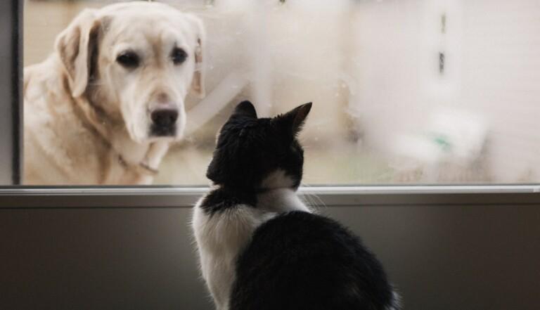 Santé mentale, solitude... les propriétaires d'animaux ont mieux vécu le confinement que les autres