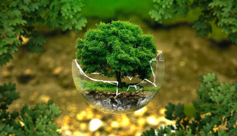 Environnement : oui, il y a quand même quelques bonnes nouvelles sur l'état de notre planète en 2020