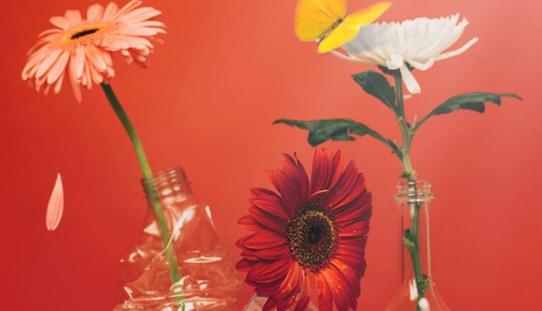 Expérience : 30 jours de minimalisme de digital