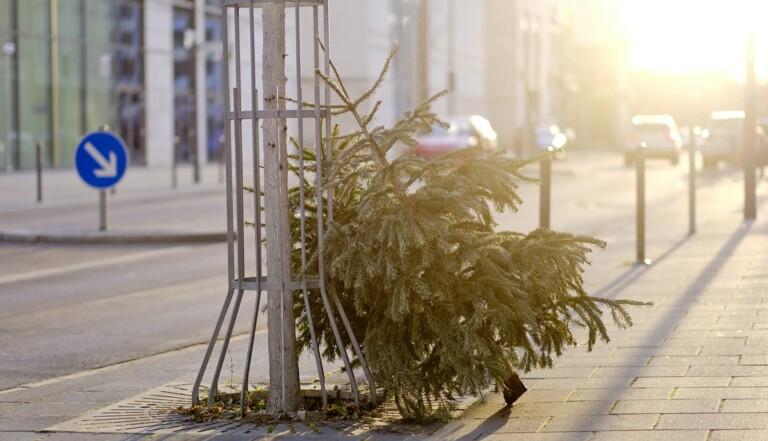 #ChasseursDeSapins, un concours à la recherche des sapins de Noël abandonnés
