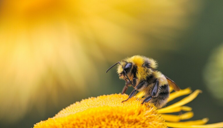 Quiz : êtes-vous incollable sur les abeilles ?