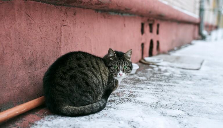 L'homme qui sauve les chats de Fukushima