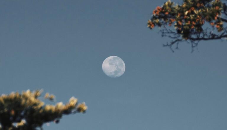 Sauver l'humanité avec des banques de sperme sur la Lune ? Les Américains se penchent sur la question