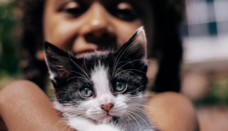 Comment les chats peuvent aider les personnes autistes
