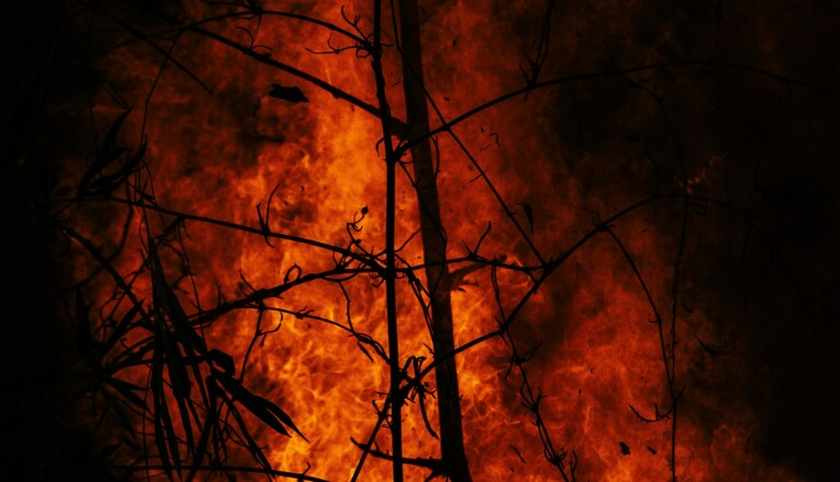 #PrayforAmazonia: un hashtag dénonce le silence autour des incendies en Amazonie