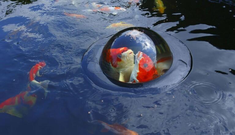 Poissons flottants