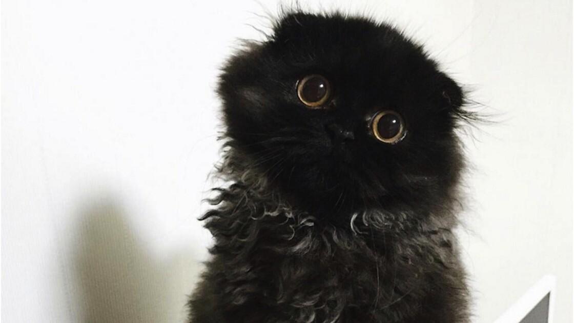 Gimo, le chat aux gros yeux noirs hypnotiques