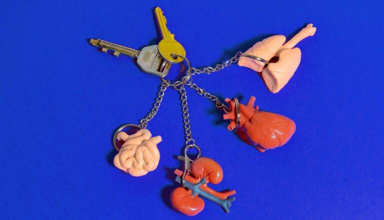 Quels organes peut-on se faire enlever sans mourir?