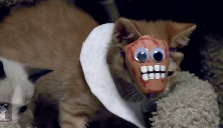 American Horror Story, version chatons !