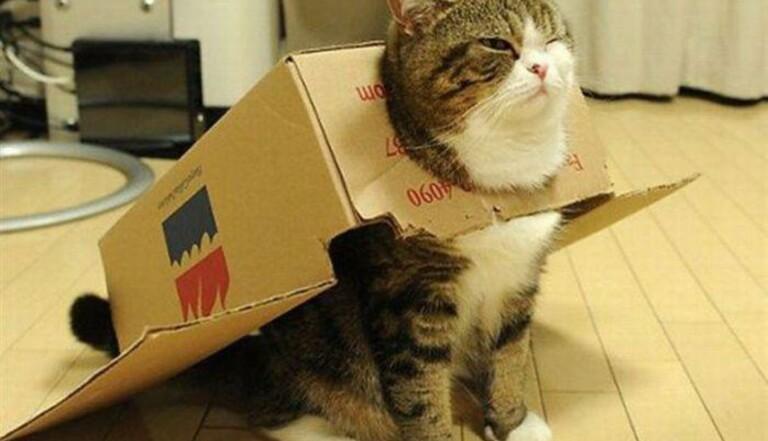 Ces chats qui refusent d'admettre qu'ils ne rentrent pas dans des boîtes