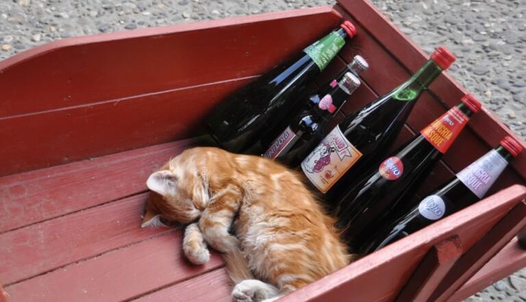Quel alcool provoque quelle émotion ?