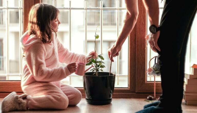 8 activités vertes, mais à faire à l'intérieur