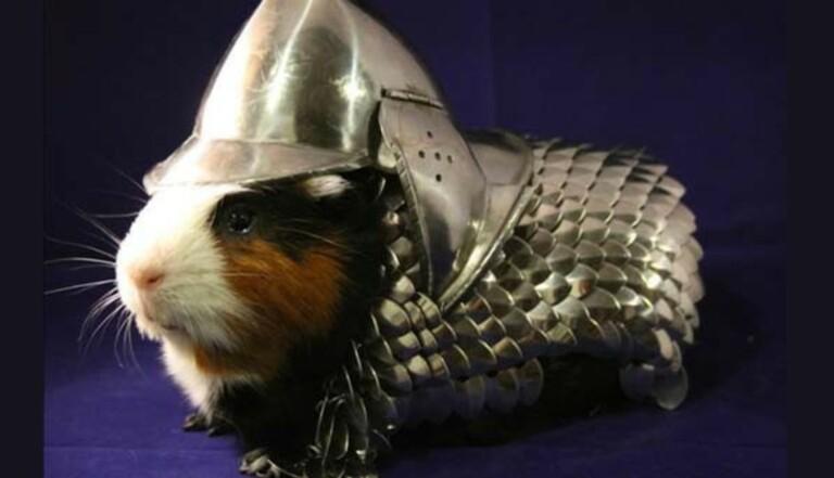 Vu sur le Web : Une armure pour cochon d'Inde à 18 000 euros