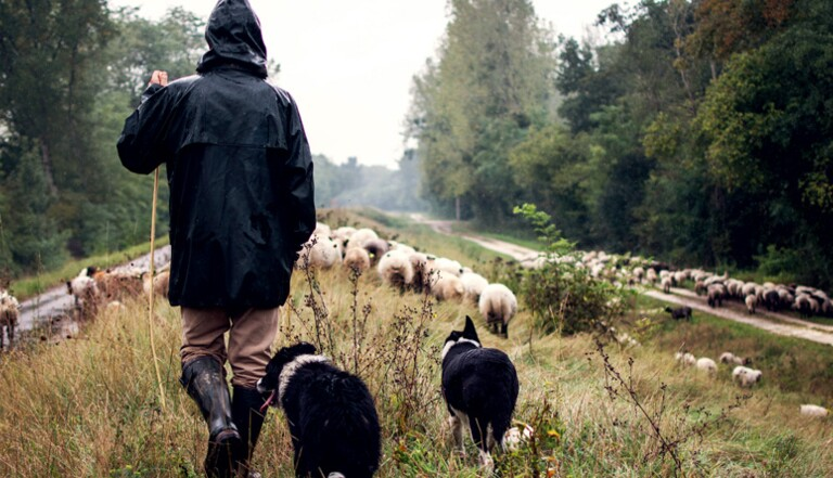J'ai testé la vie de berger