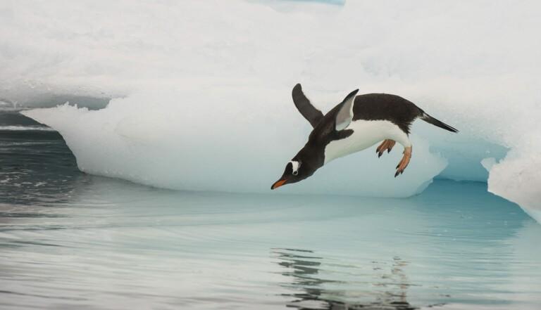Antarctique : 200 ans après sa découverte, le pôle sud entame une fonte irréversible