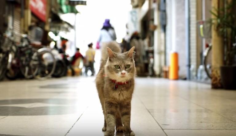 Cat Street View, le Japon à hauteur de chat