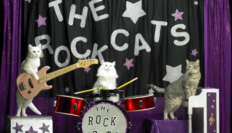 The Rock Cats, un groupe musical félin