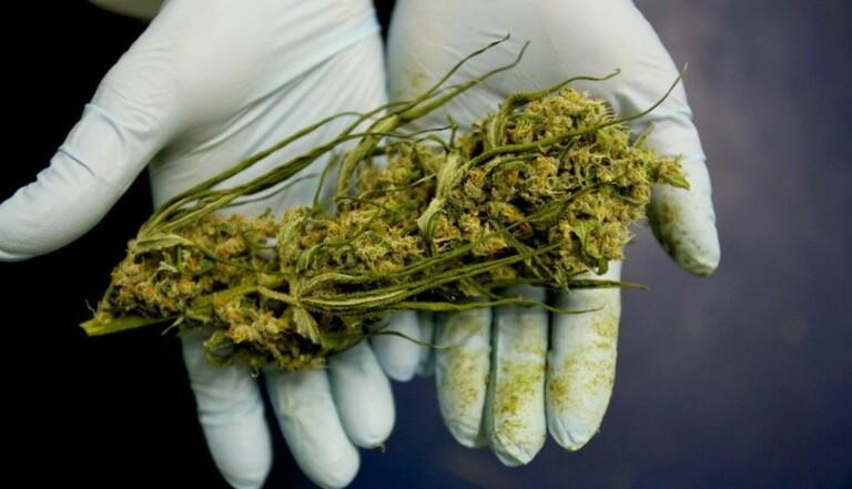 Au Canada, la culture du cannabis s'enseigne désormais à l'école