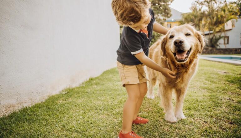 Avoir un chien enfant réduirait les risques de schizophrénie à l'âge adulte
