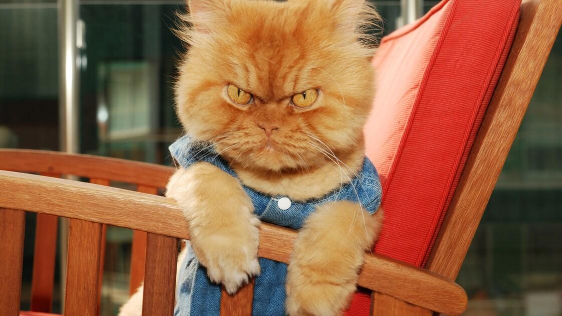 Votre chat est agressif ? C'est peut-être à cause de la couleur de son pelage