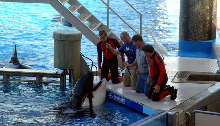 Le Canada interdit les delphinariums : qu'attend la France ?
