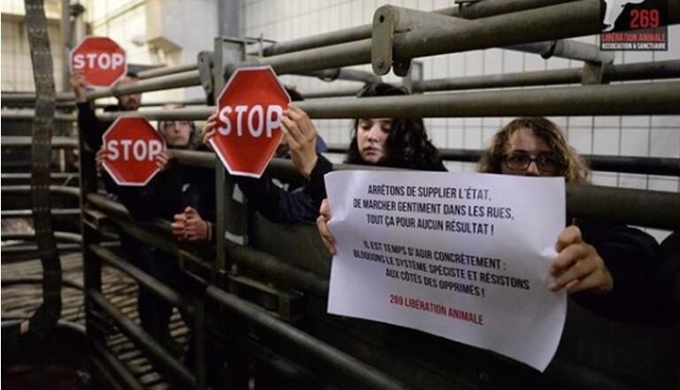 Occupation d'abattoirs, exfiltration d'animaux, attaque de boucheries : Nous avons suivi les radicaux de la cause animale